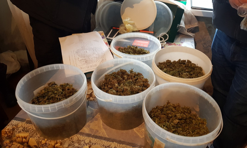 Немолодому крымчанину грозит 10 лет тюрьмы за марихуану