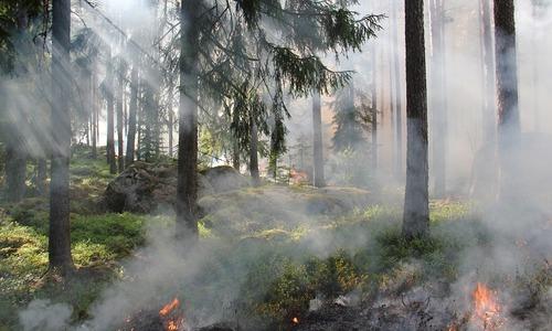 Крымчане спасли от пожара лес на ЮБК
