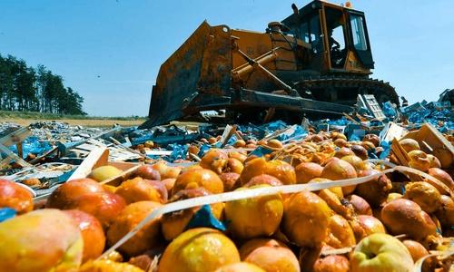 В Севастополе сыр гуманно сожгли, а не раздавили трактором