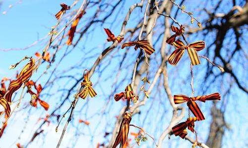 Крымские деревья массово избавляют от георгиевских ленточек