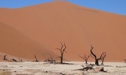 90% новых растений в Симферополе погибает из-за нехватки воды
