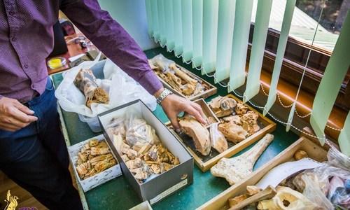 В Крыму можно будет пощупать кости древних животных