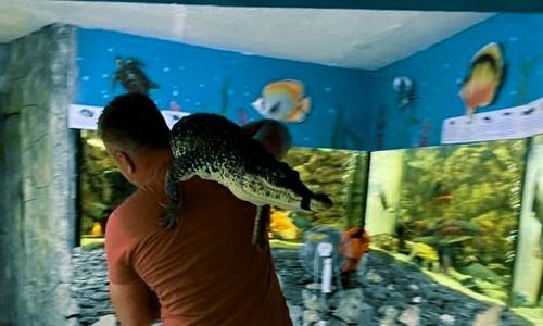 В Ялте вылавливали крокодилов из мутной воды