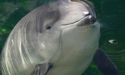 За три месяца в Крыму нашли 160 трупов дельфинов