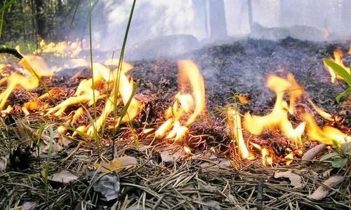 В Крыму сохраняется пожарная опасность