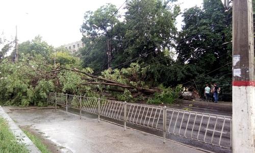 Ливень и падающие деревья: Симферополь сегодня штормит