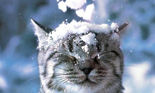 Крымчан ждет снег и сильный ветер