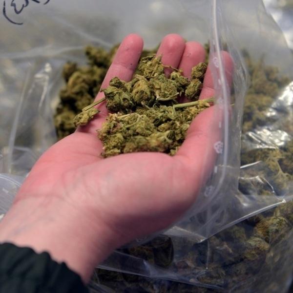 Купить готовую марихуану семена канабиса самара