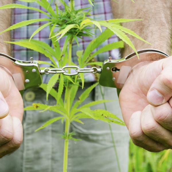 уголовная ответственность за выращивание наркосодержащих растений